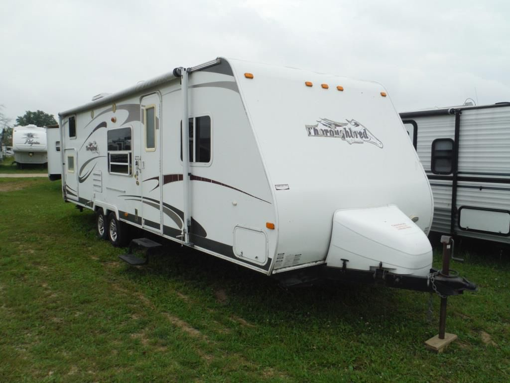 2008 PALOMINO Thoroughbred 271